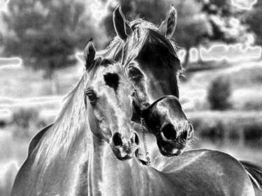 Photo de chevaux revue à ma façon